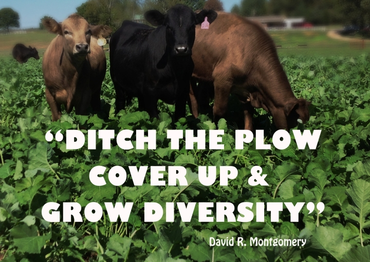 cover crops- DRM